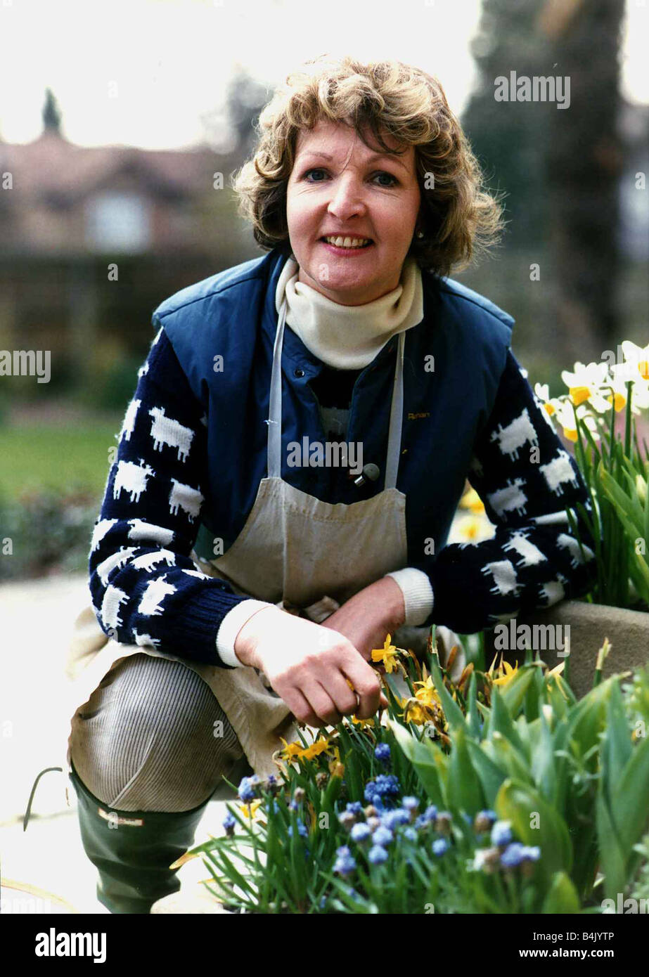Penelope Keith actress who starred in To The Manor Born and The Good Life April 1989 DBase - Stock Image