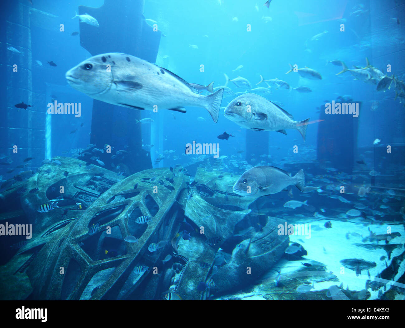 View from East Tower Lobby in the Ambassador Lagoon, 11-Million liter fish-tank with more than 60000 fishes. - Stock Image