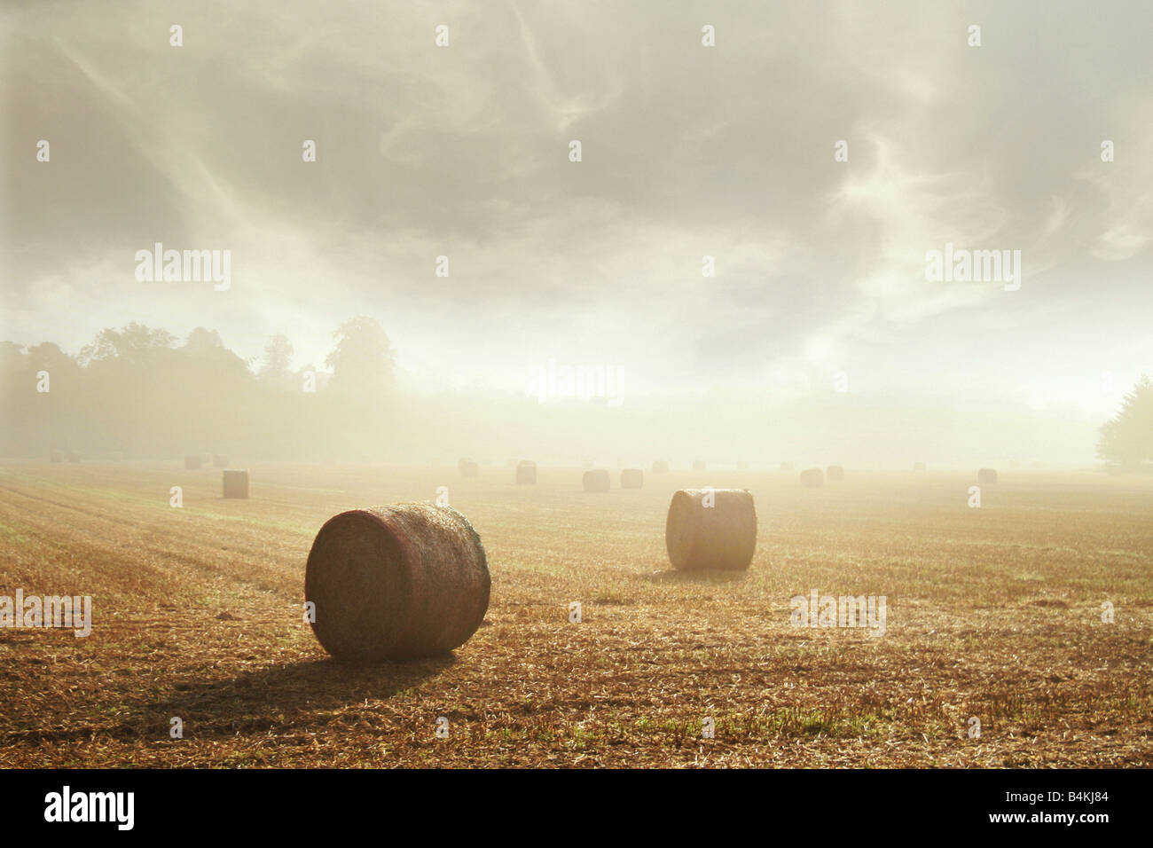 round hay bales in a field - Stock Image