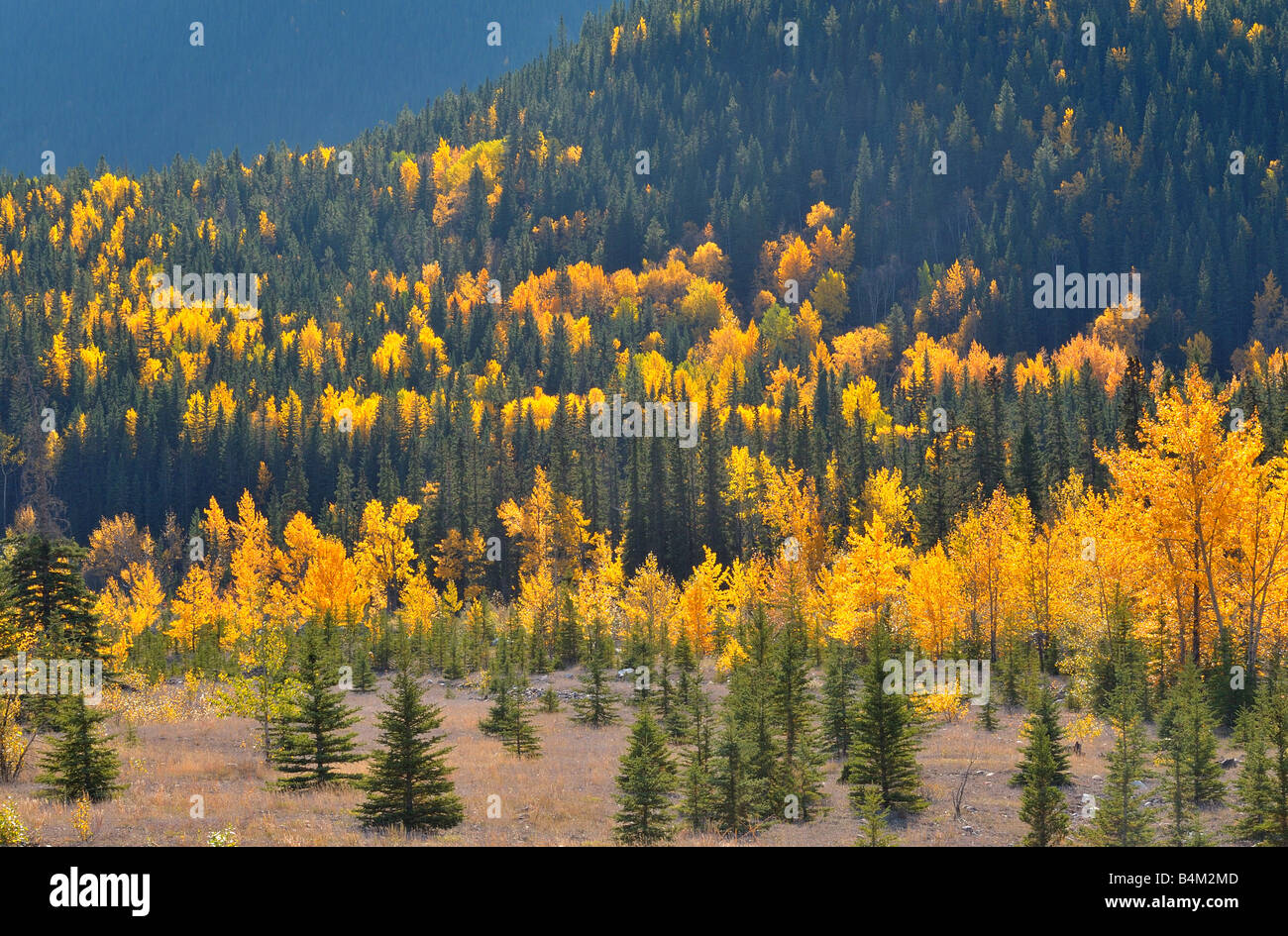 Mixed forest 0801 - Stock Image