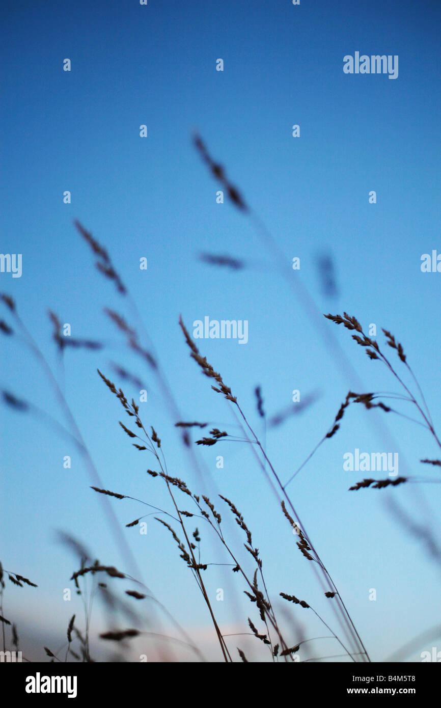 long grass - Stock Image