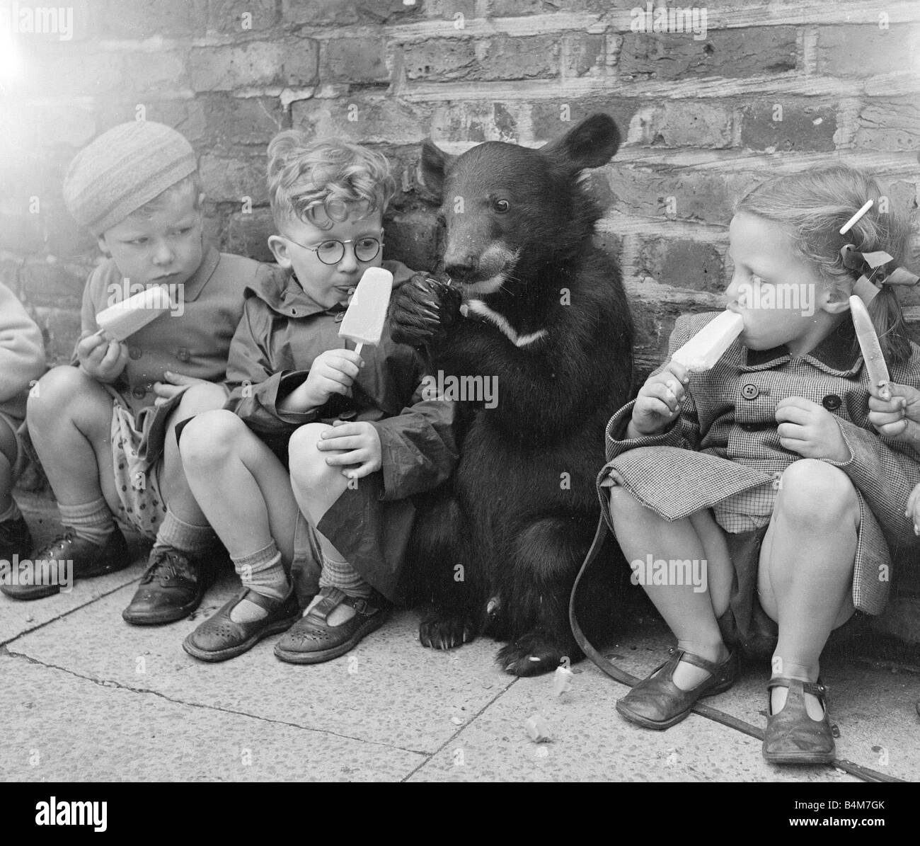 Biffo a Himalayan mountain bear seen here enjoy a ice lolly with the children July 1953 - Stock Image
