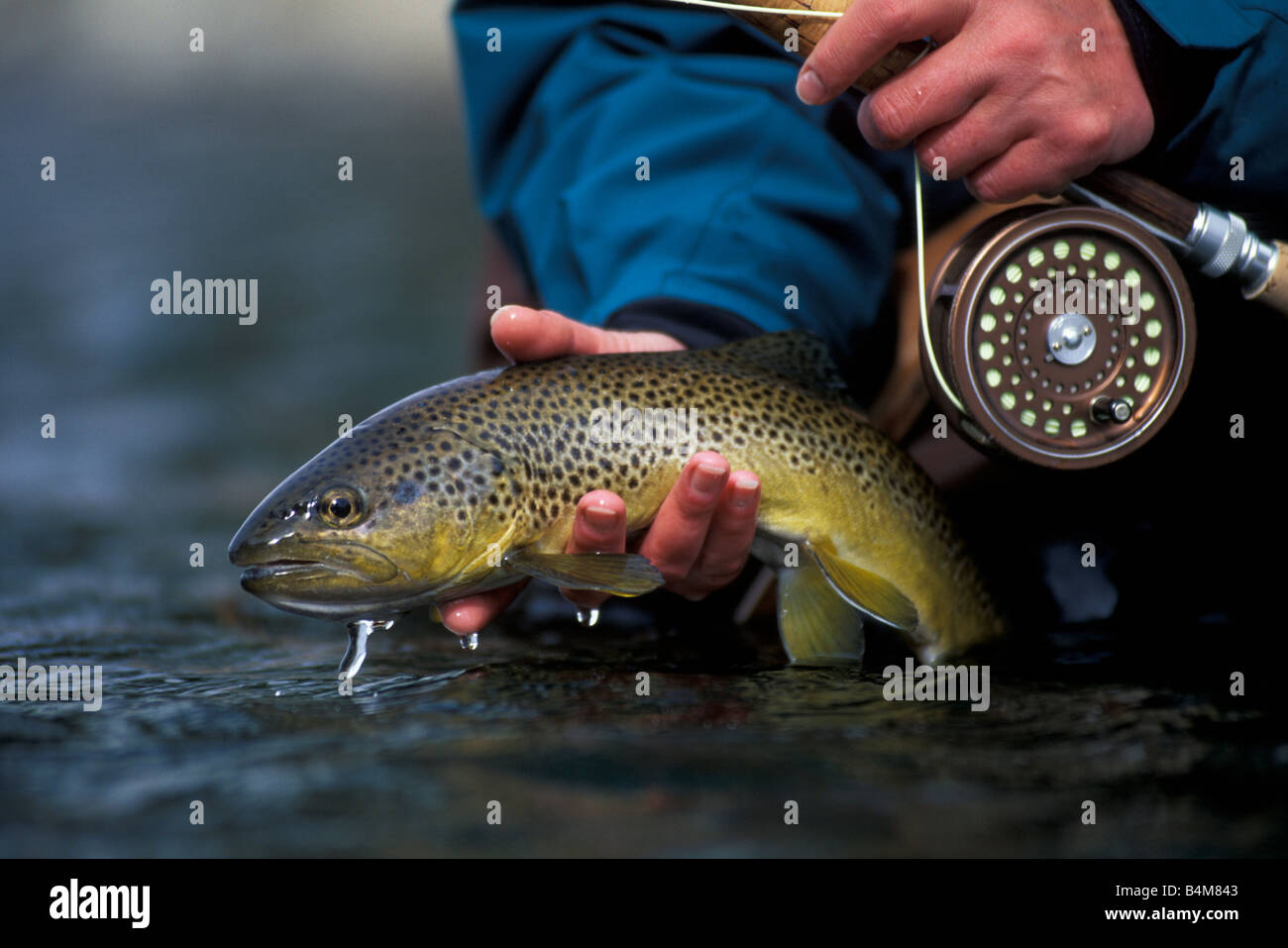 Trout Gill Stock Photos & Trout Gill Stock Images - Alamy