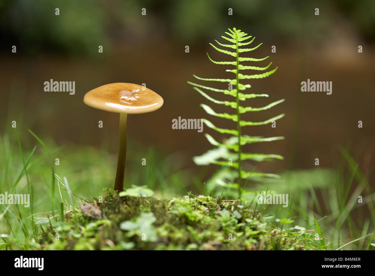 Toadstool found in the New Forest, Hampshire, England, UK. - Stock Image