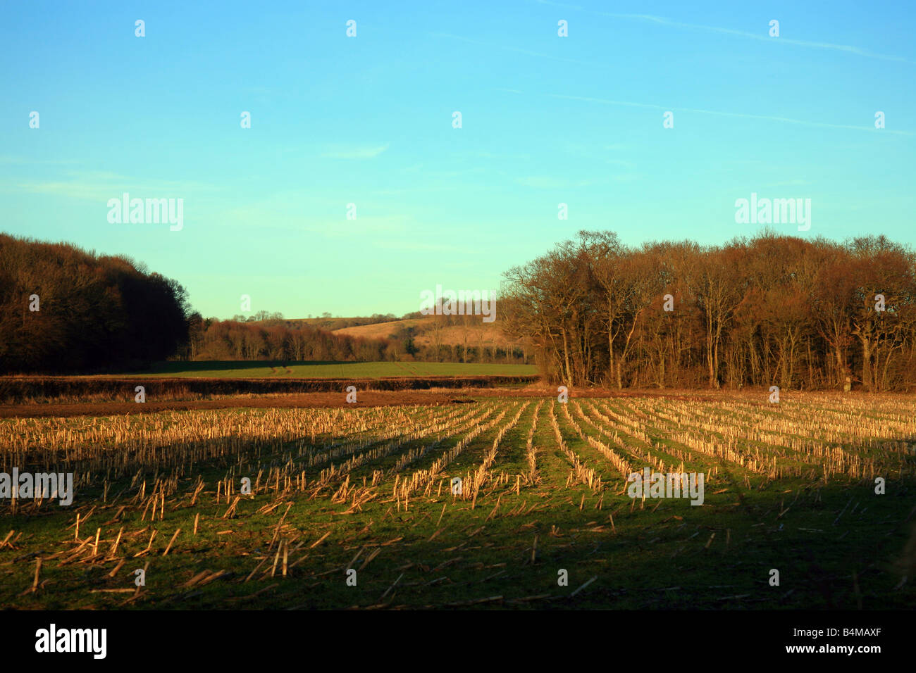 winter farmland with trees and shaddows in the Kent countryside near Brabourne Lees, Ashford, Kent, Englan - Stock Image