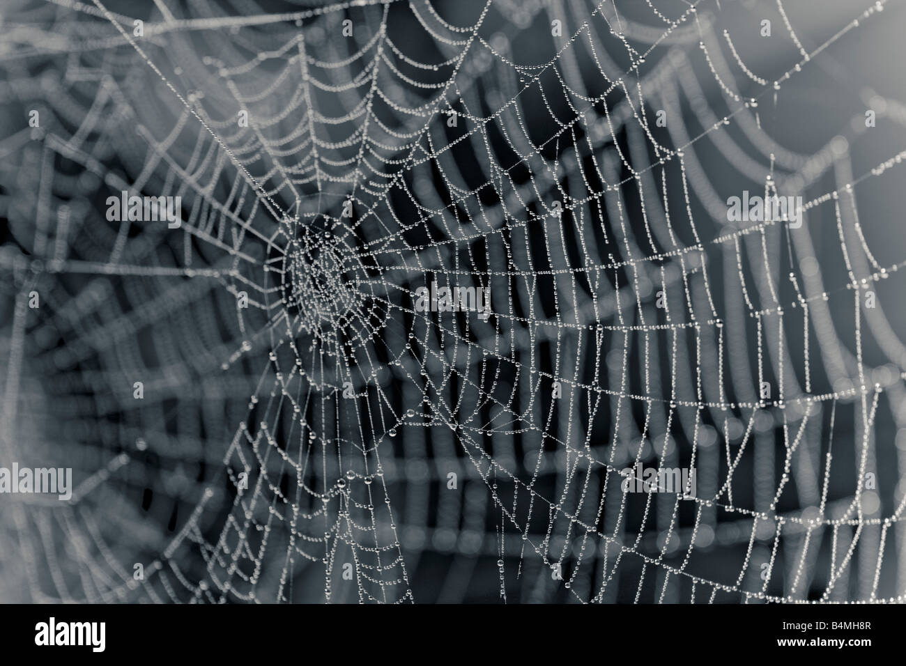 Close up of an empty cobweb - Stock Image