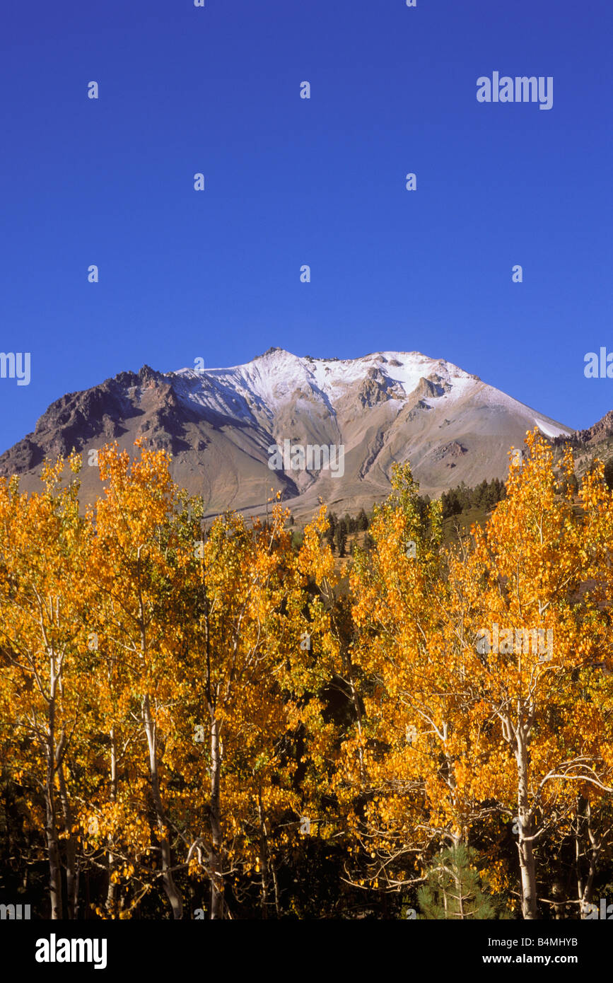Yellow fall aspens under fresh snow on Lassen Peak Cascade Mountains Lassen Volcanic National Park California - Stock Image