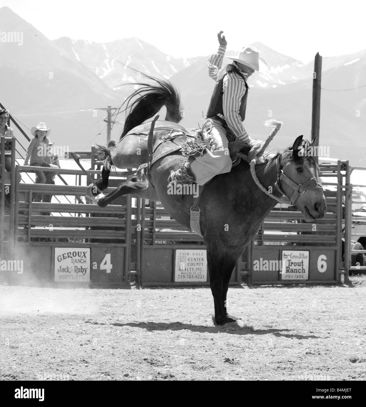 Rodeo cowboy on a bucking bronc - Stock Image