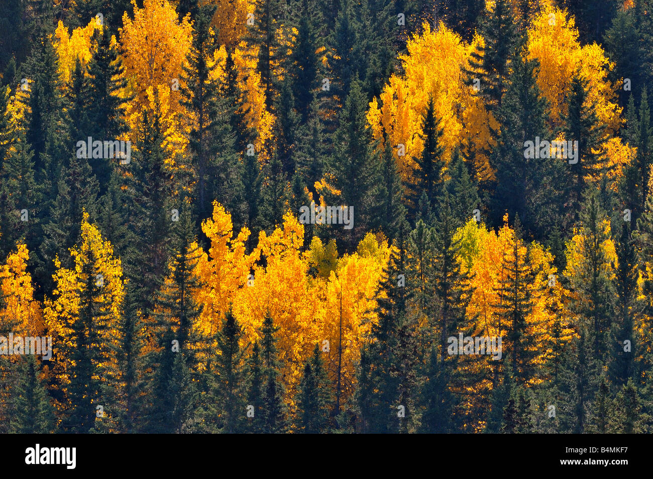 Mixed forest 0802 - Stock Image