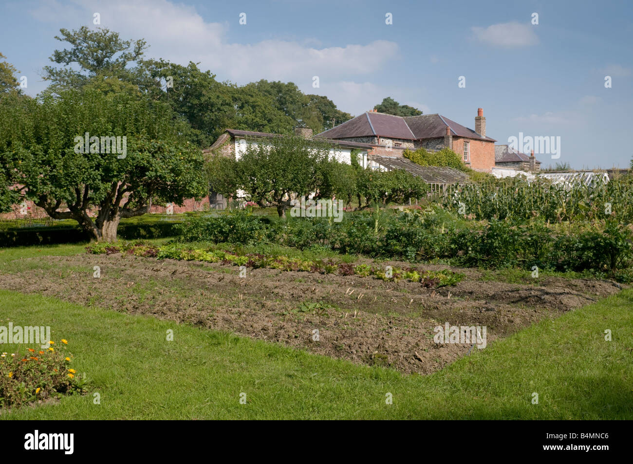the walled kitchen garden at Llanerchaeron Hall Farm and Gardens Wales UK - Stock Image