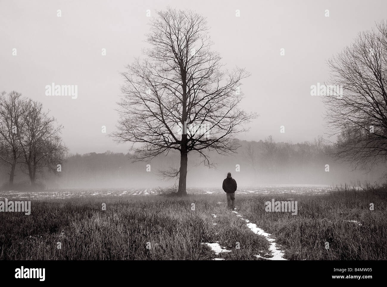 Dreamy image of a shadowy man walking in the mist near a large tree - Stock Image