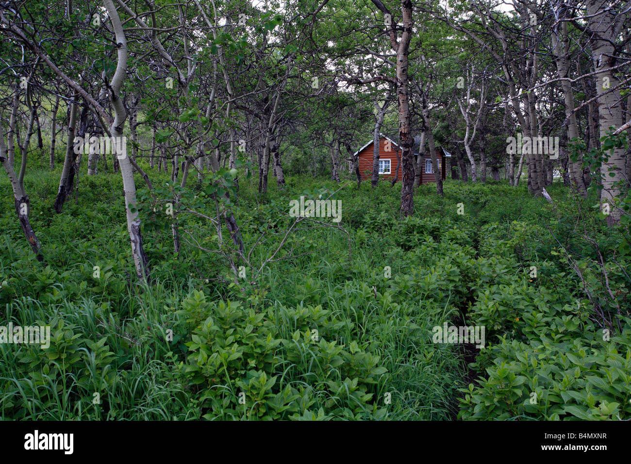 Cabin in forest - Stock Image
