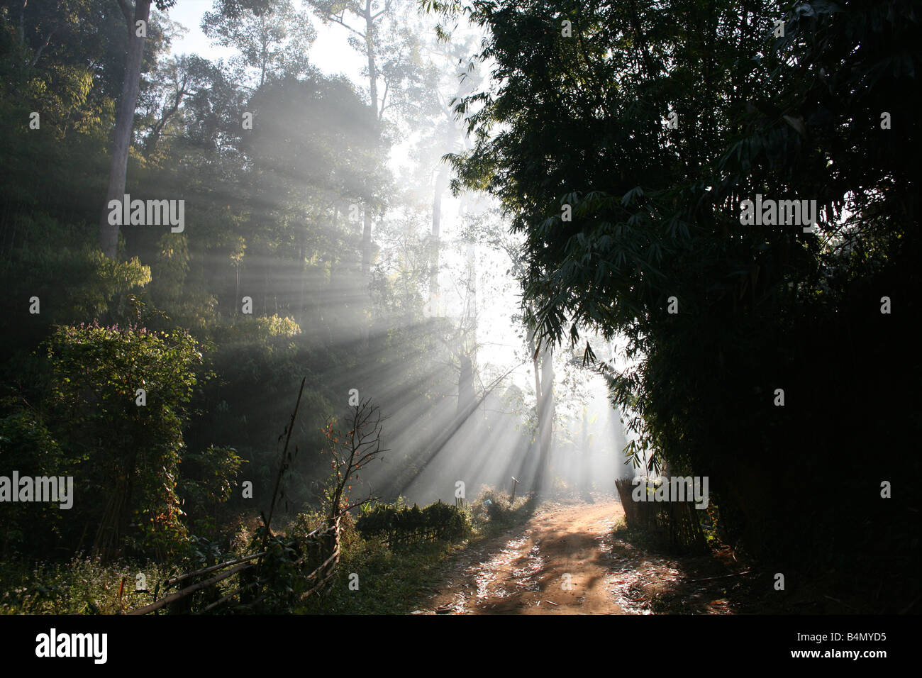 Sunlight streams through the jungle near the Longneck village Approximately 300 Burmese refugees in Thailand are - Stock Image