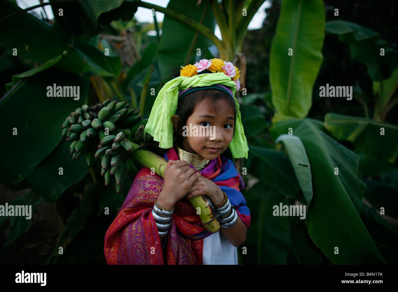A young Longneck girl carries a stalk of bananas Approximately 300 Burmese refugees in Thailand are members of the Stock Photo