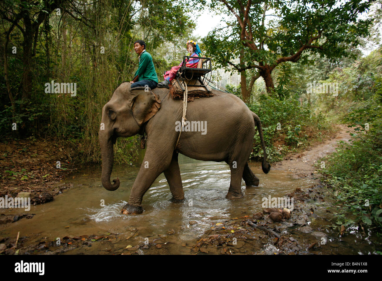 An elephant carries two Longneck group members crosses a stream Approximately 300 Burmese refugees in Thailand are - Stock Image