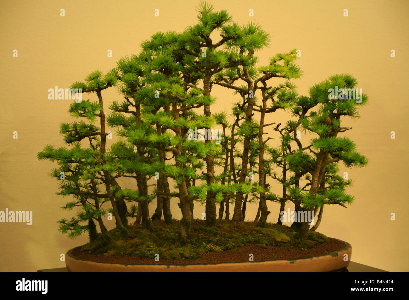 Bonsai Forest - Stock Image