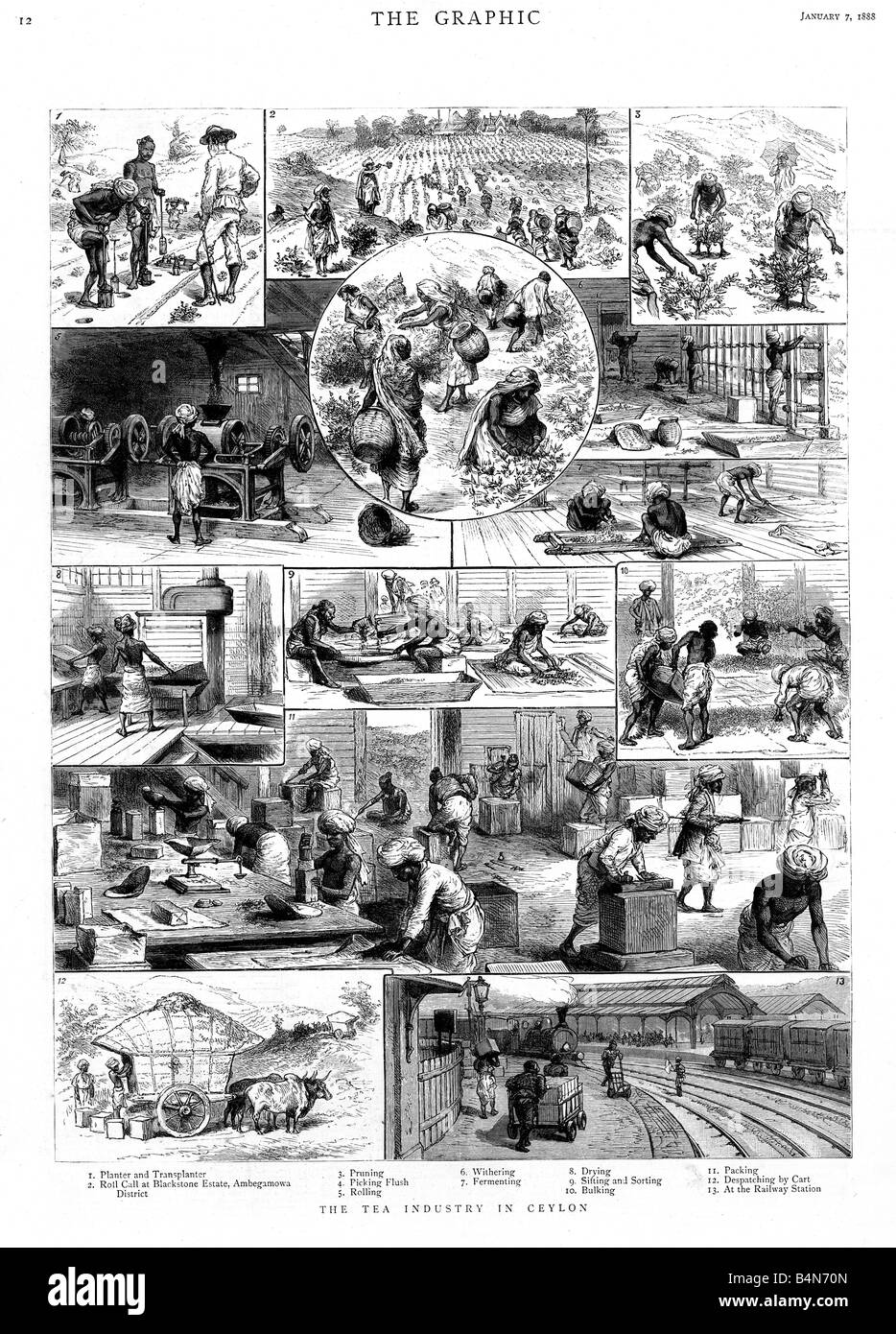 Tea Production in Ceylon 1888 engraving of the plantation industry in what is now Sri Lanka - Stock Image