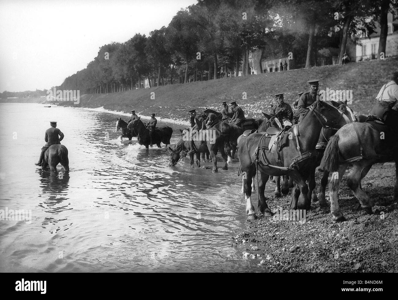 World War One Soldiers watering artilery carriage horses Circa 1916 - Stock Image