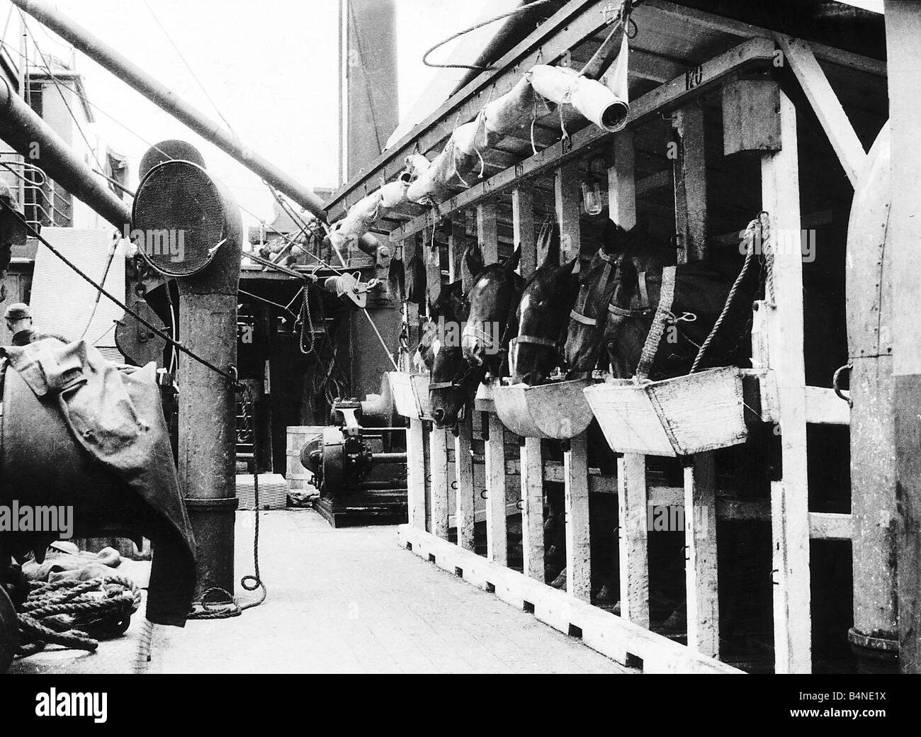 British cavalry horses onboard a transport ship 1915 sailing to France during World War One - Stock Image