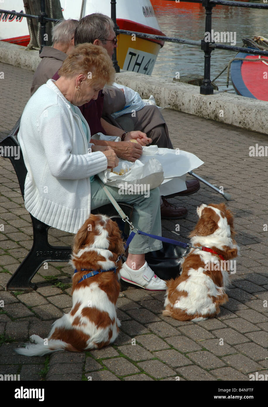 woman eating fish and chips, Weymouth, Dorset, England, UK - Stock Image