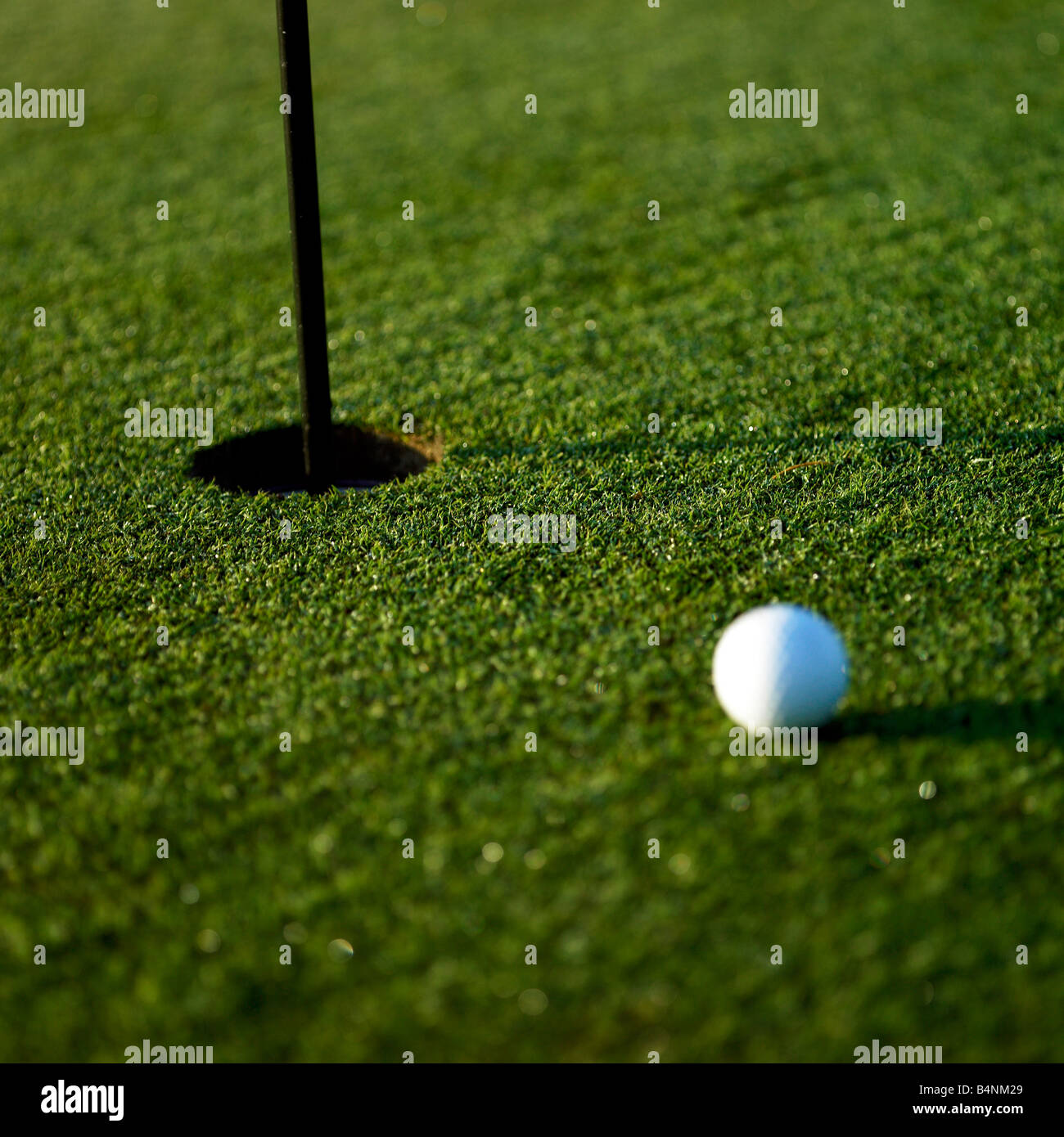 Freshly cut putting green - Stock Image
