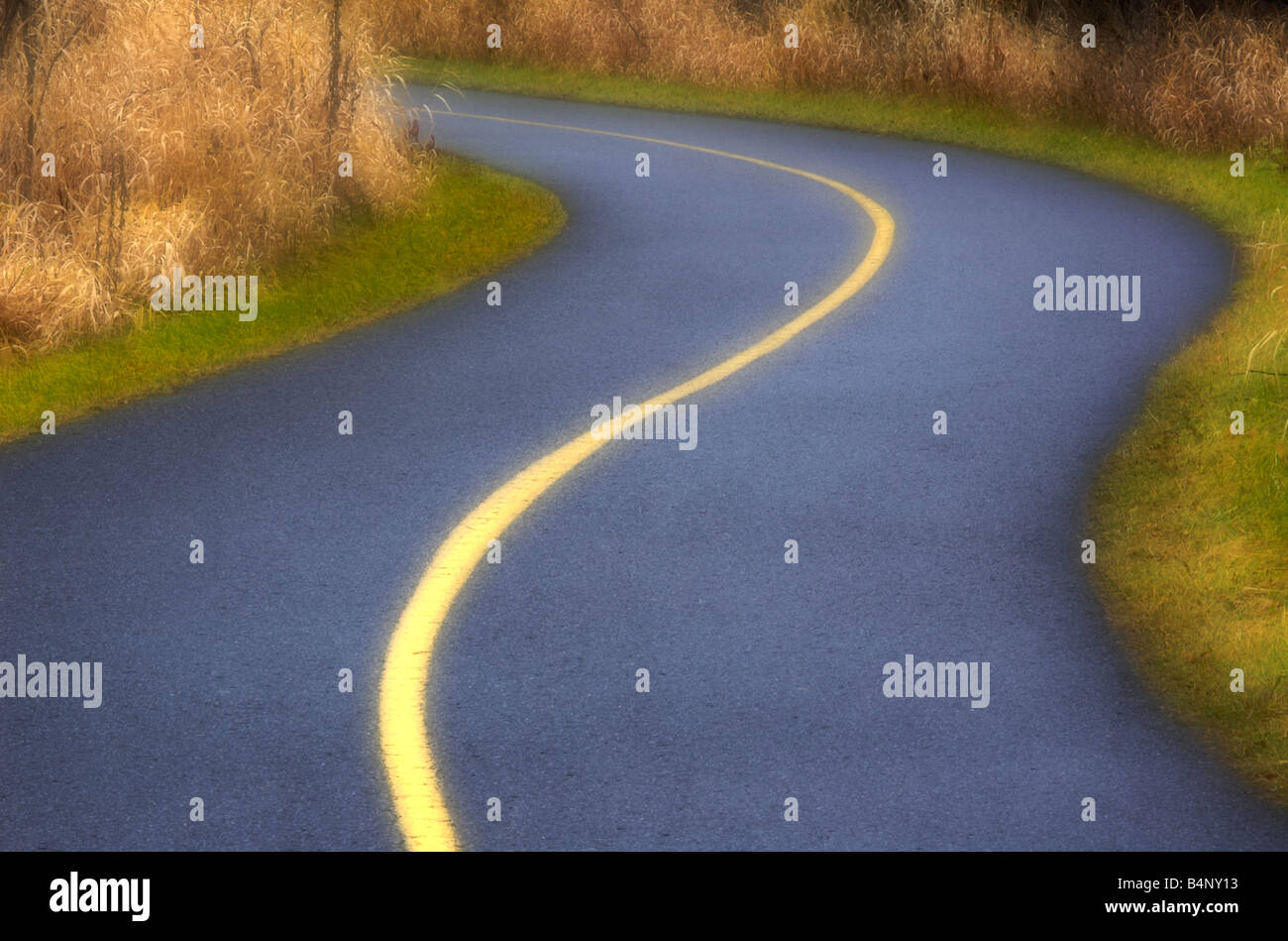 Small paved and curvy road used as a bike trail in a park - Stock Image