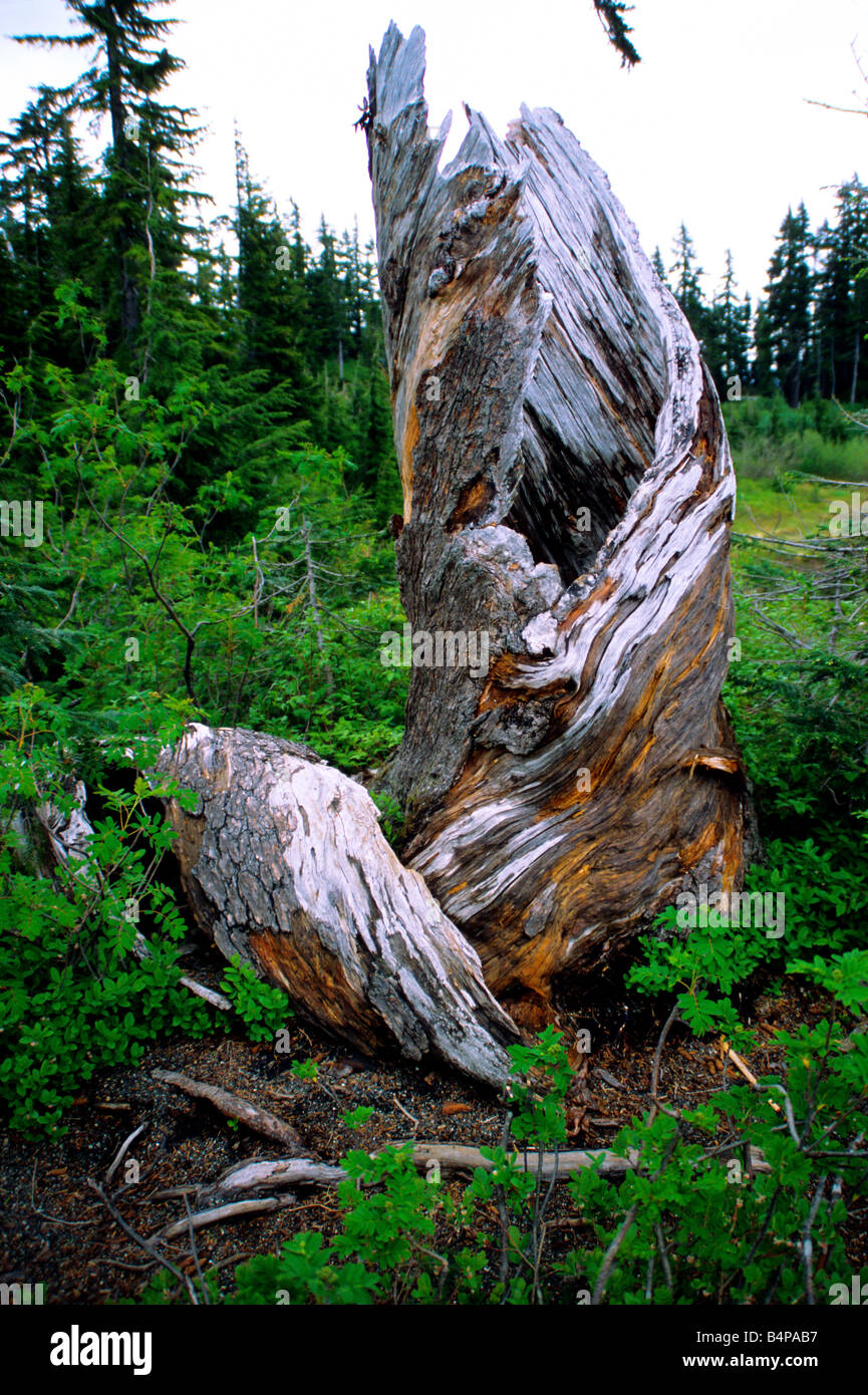 North America: natural areas. Natural areas of North America: table 41