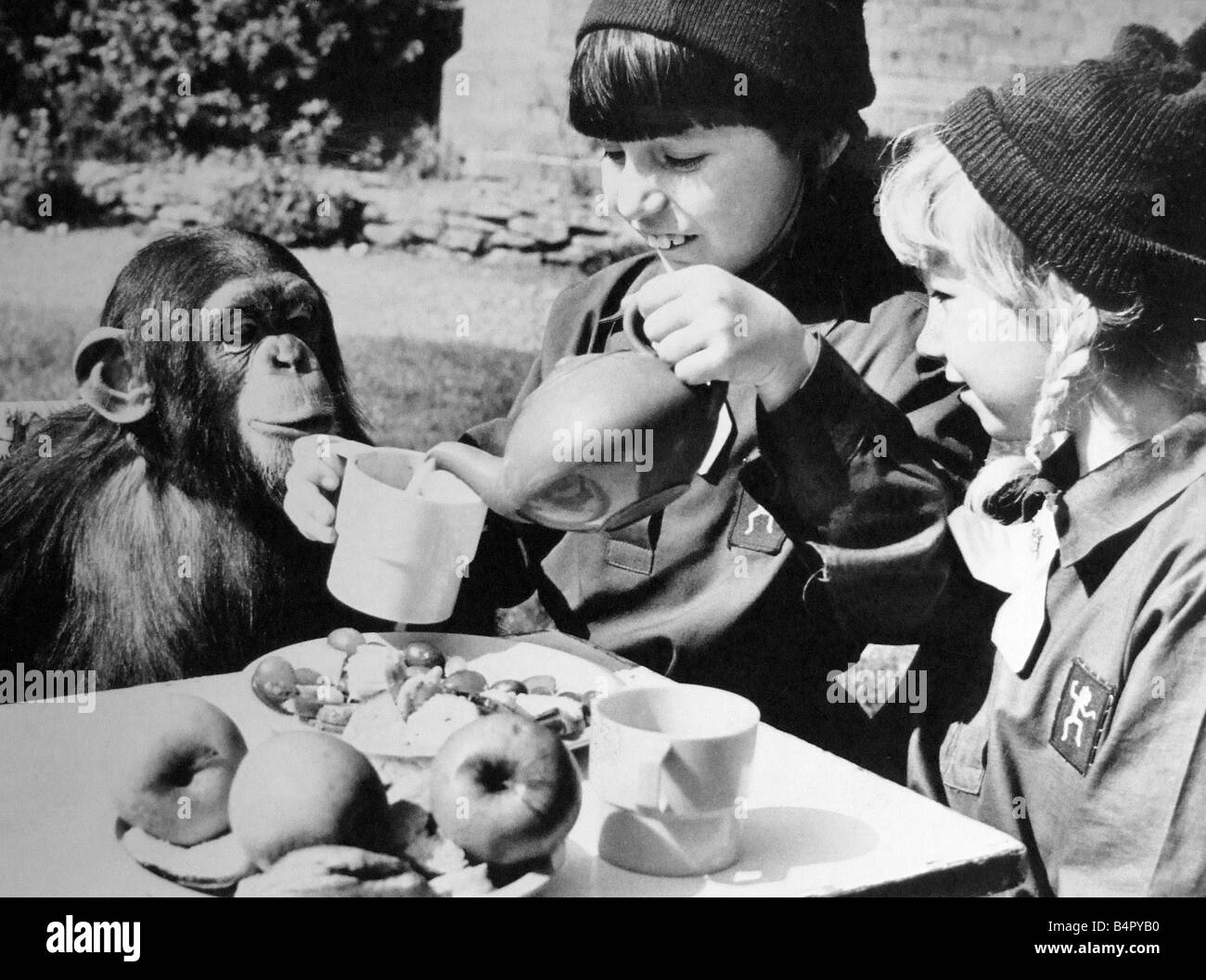 Two girls from the 217 Birmingham Brownie Pack Acocks Green having tea with a chimp at Twycross Zoo They are Rebecca - Stock Image