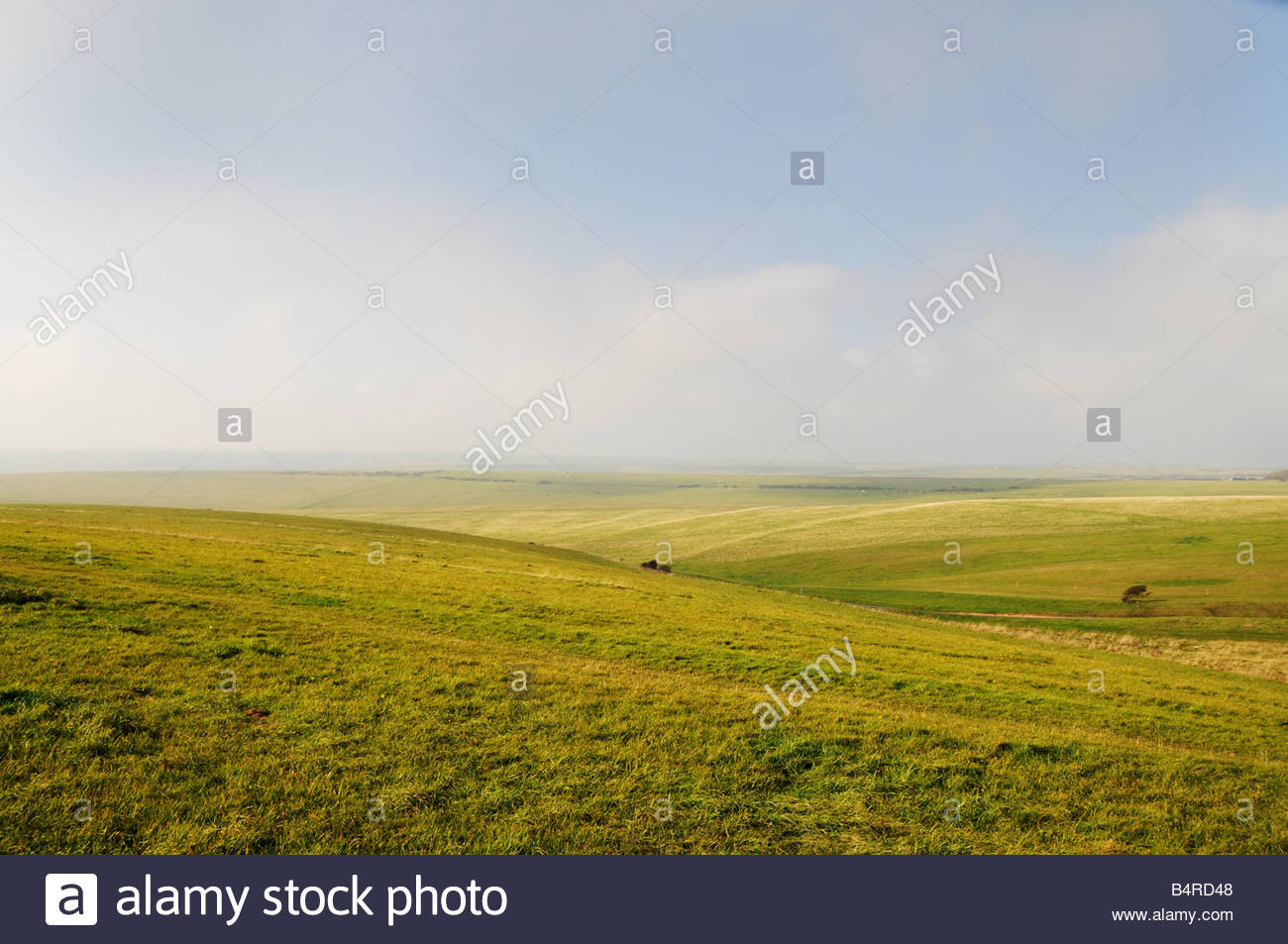 Green fields in West Sussex - Stock Image