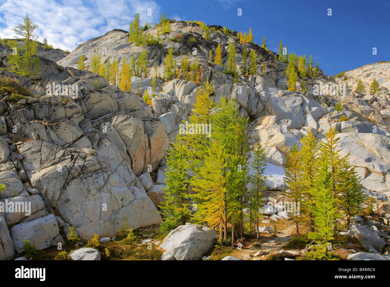 Larches at Inspiration Lake in the Enchantment Lakes area of the Alpine Lakes Wilderness, Washington Stock Photo