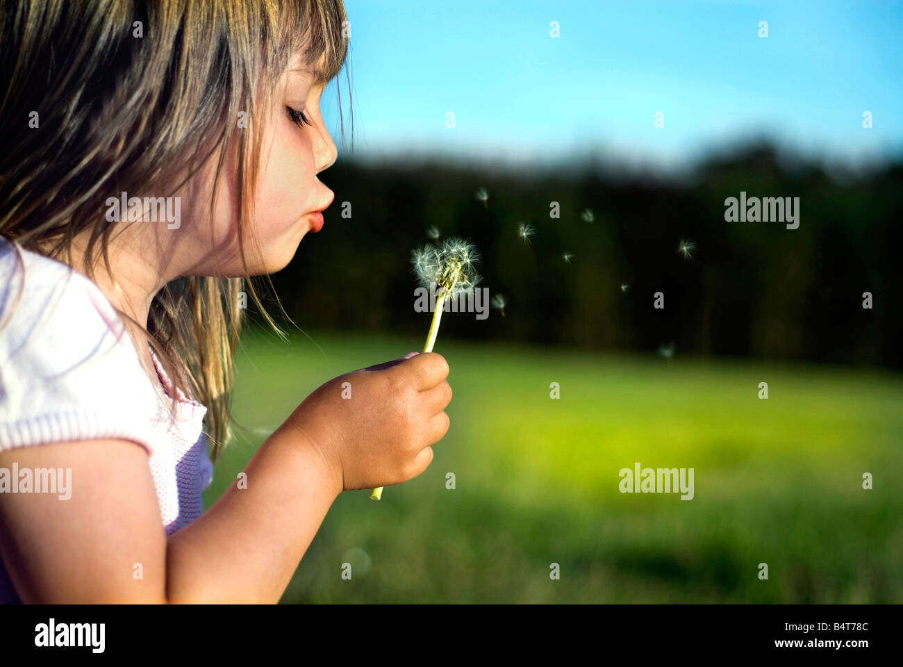 a little cute girl, child blowing dandelion on a meadow - Stock Image