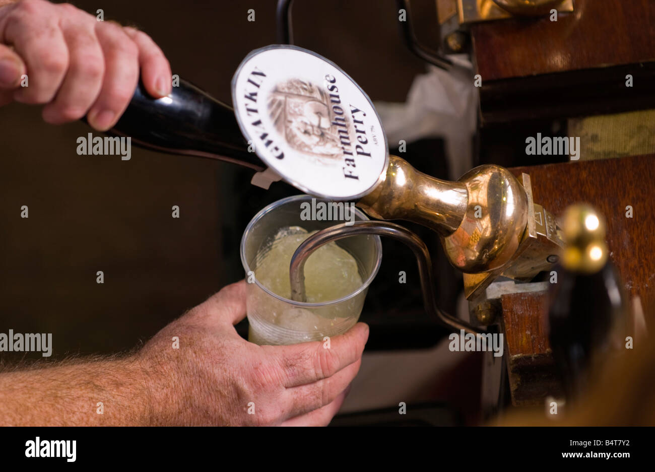 Pulling pint of PERRY at Abergavenny Food Festival - Stock Image