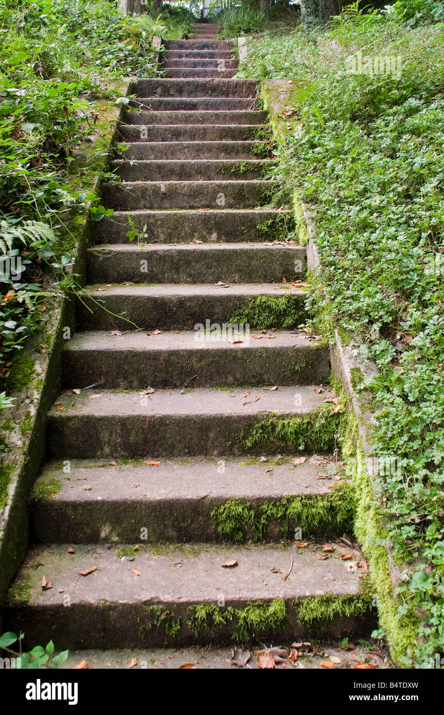 Concrete steps covered in moss leading up through the undergrowth in a forest. - Stock Image