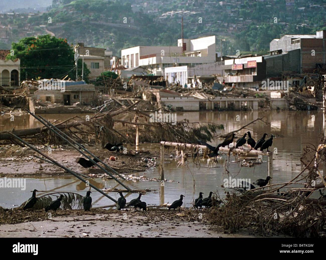 Honduras Weather Hurricane Mitch Nov 1998 BLACK VULTURES REST ON