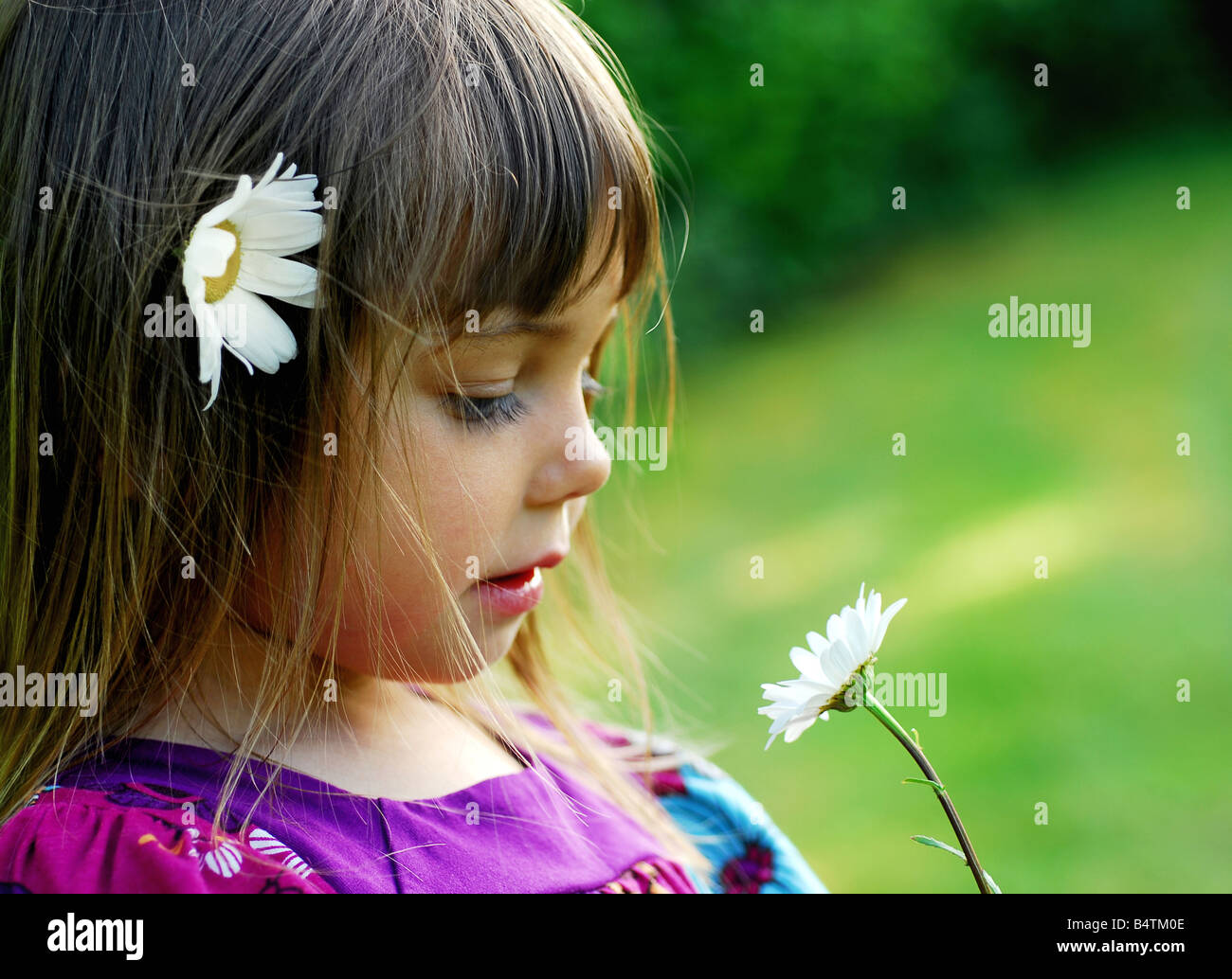 a little cute girl, child holding flower a daisy on a meadow stock