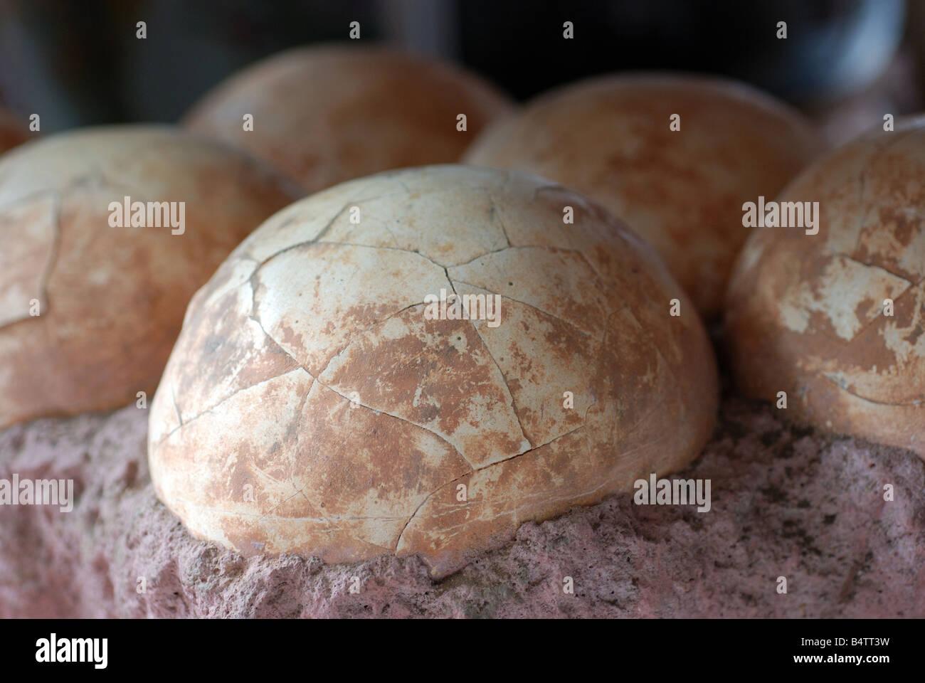 Dinosaur Eggs Replica - Stock Image
