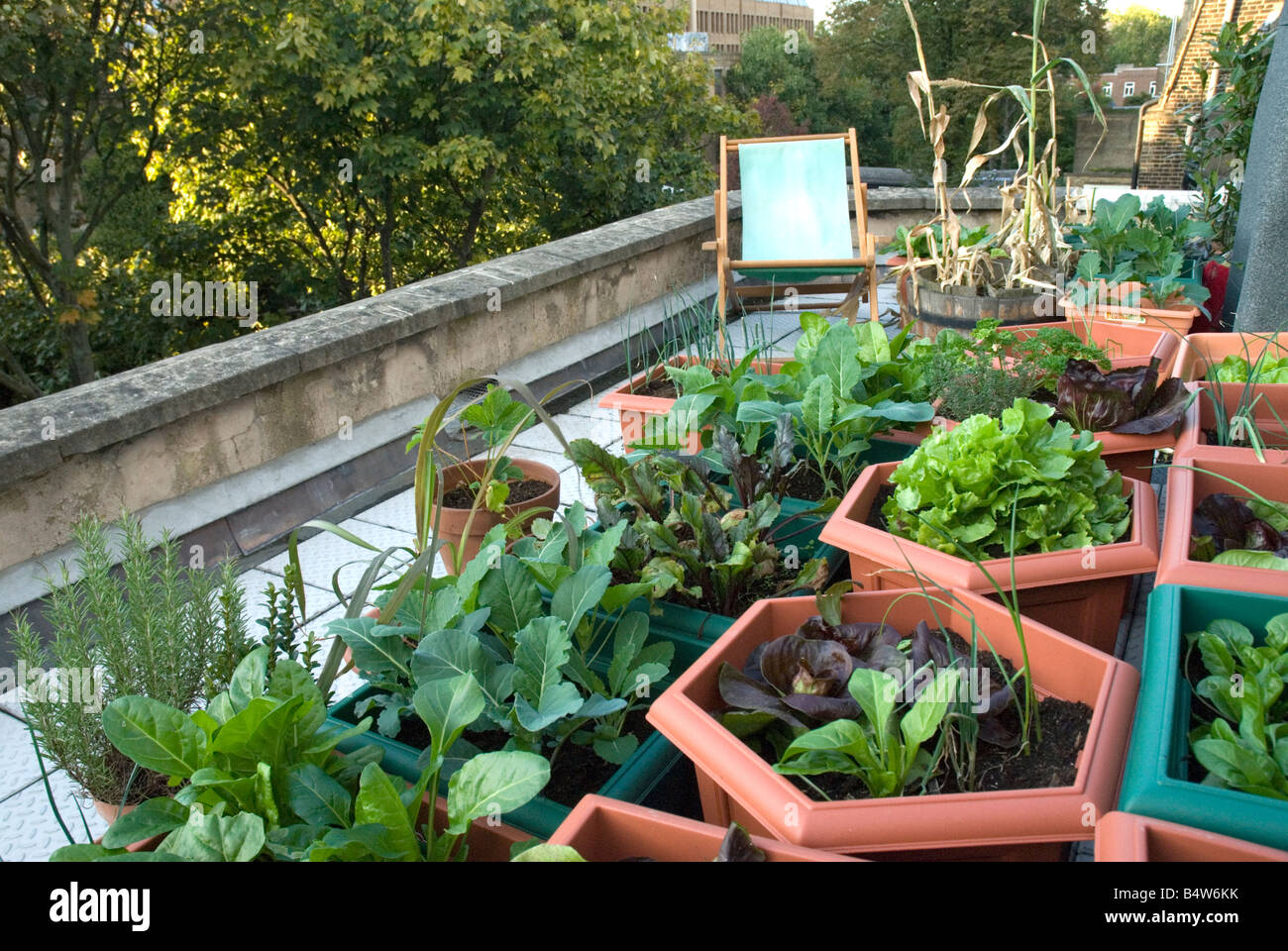 Vegetables Growing On Urban Rooftop London Urban Veggie Garden