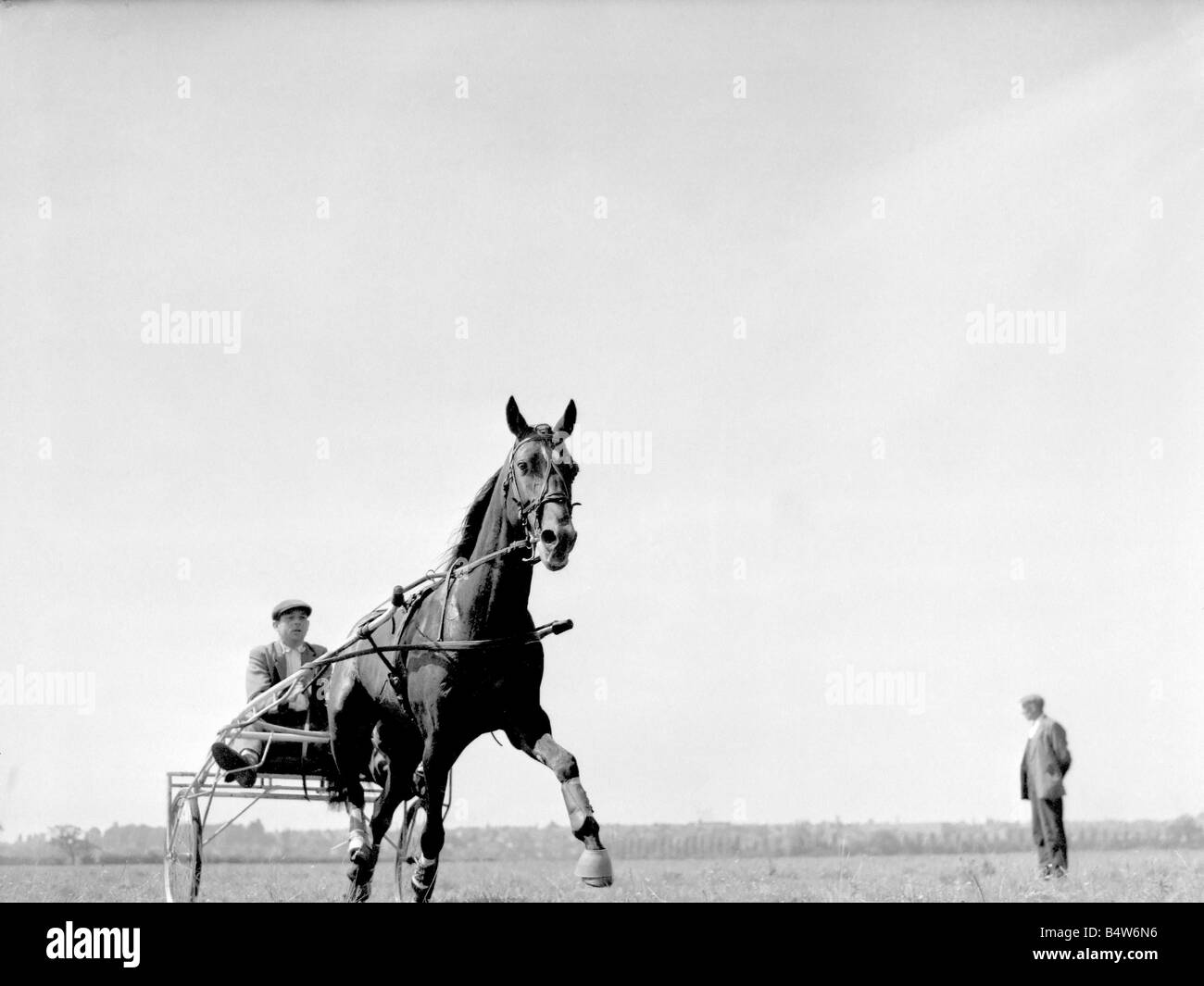 Training for the trotting race to be held at the Birmingham Show Wisemore a nine year old bay horse is driven by - Stock Image
