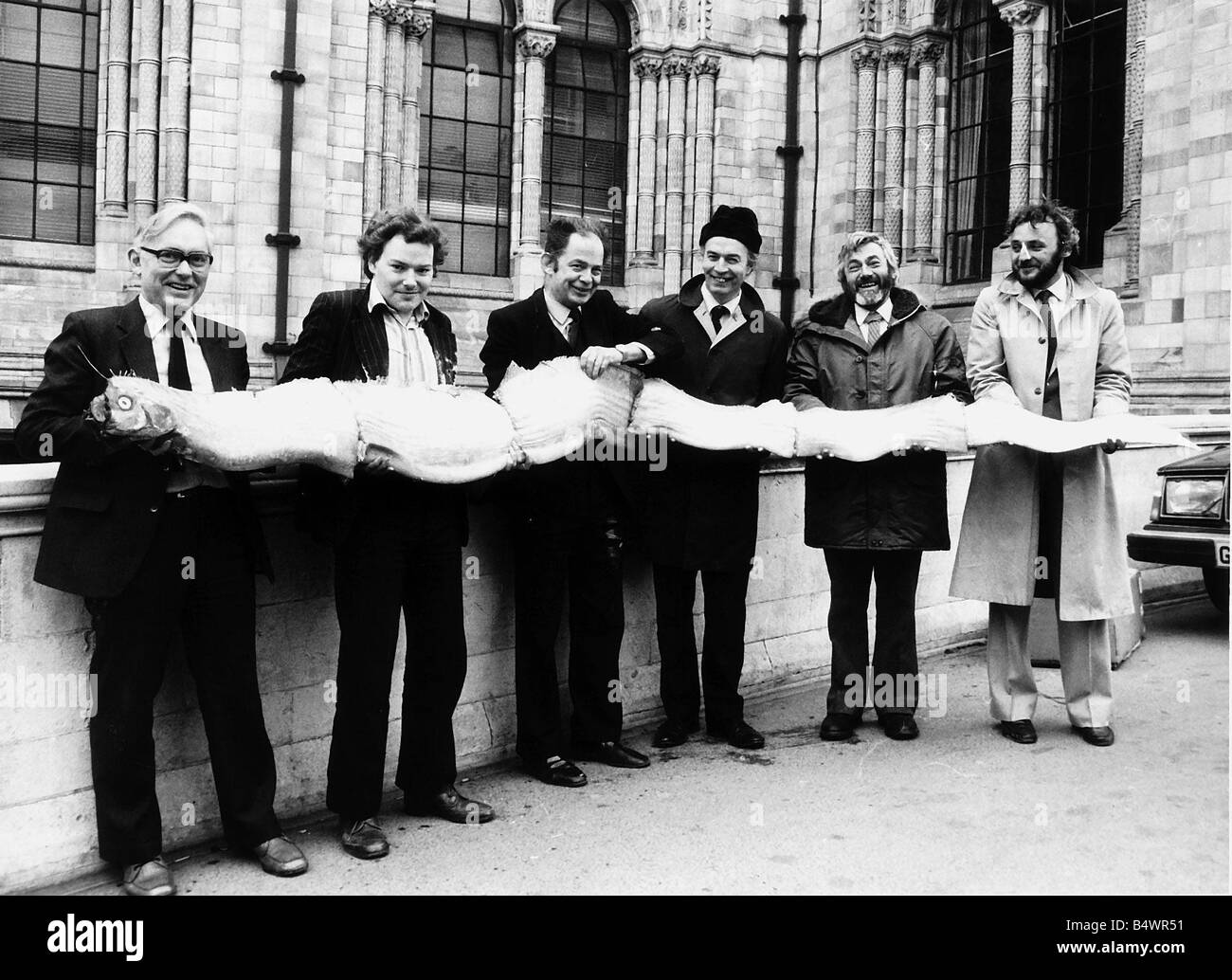 Oarfish staff Natural History Museum with oarfish found Whitby Yorkshire - Stock Image