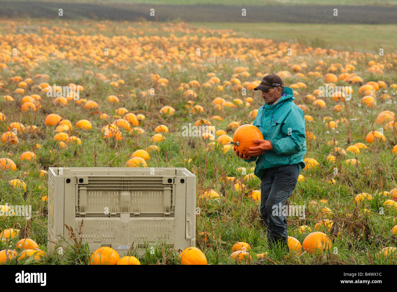 Agricultural Jobs Stock Photos & Agricultural Jobs Stock Images - Alamy