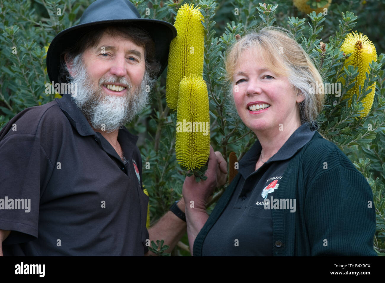 Kevin and Kathy Collins with Cutleaf Banksia Banksia praemorsa yellow form Banksia Farm Mount Barker Western Australia - Stock Image
