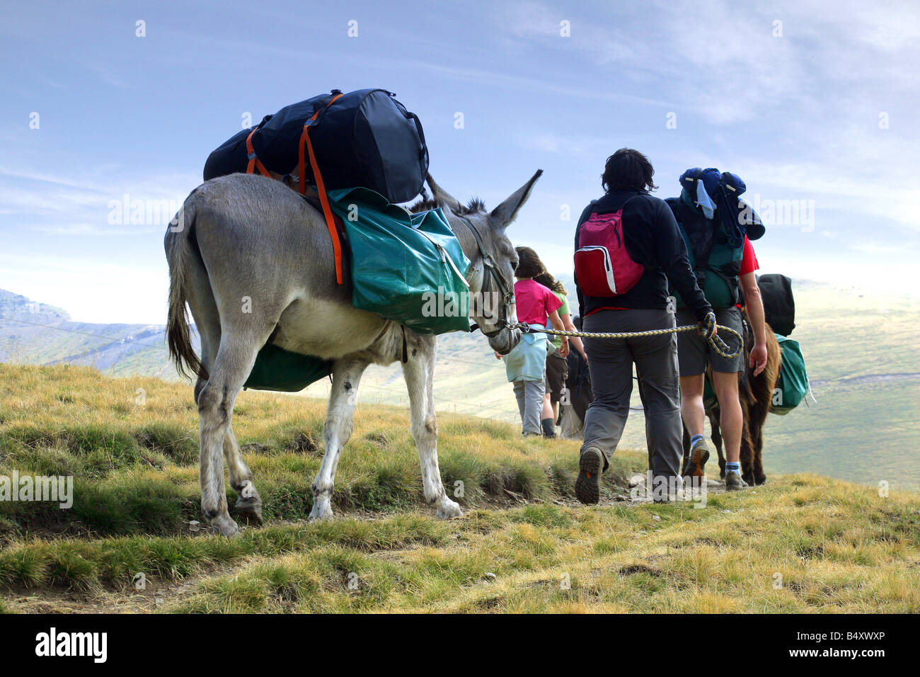 Family walking with donkeys carrying luggage, rear view - Stock Image