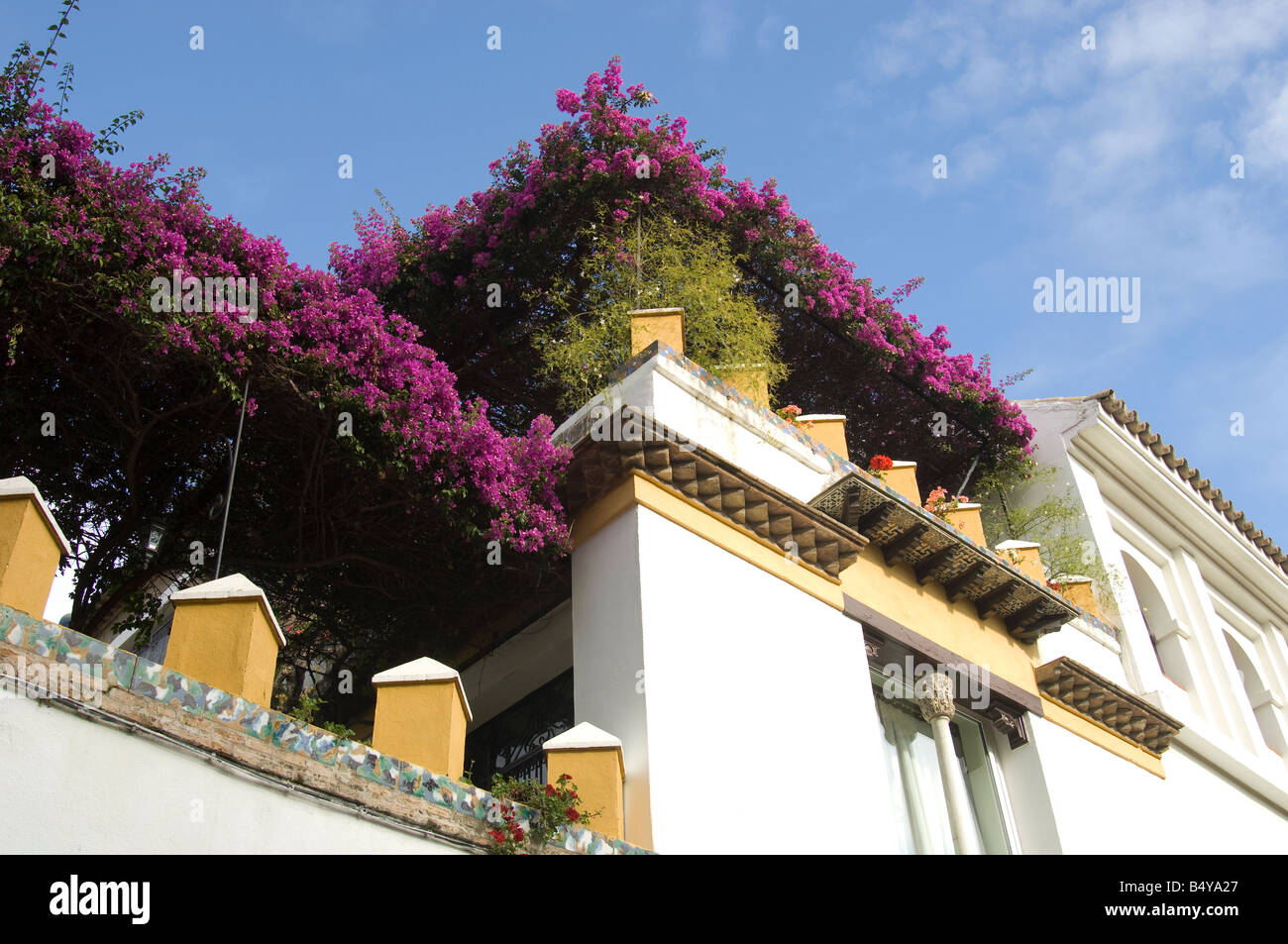 Spain. Roof garden with bougainvillea on top of No 2 Callejon del Agua in Seville.  Writer Washington Irving stayed - Stock Image