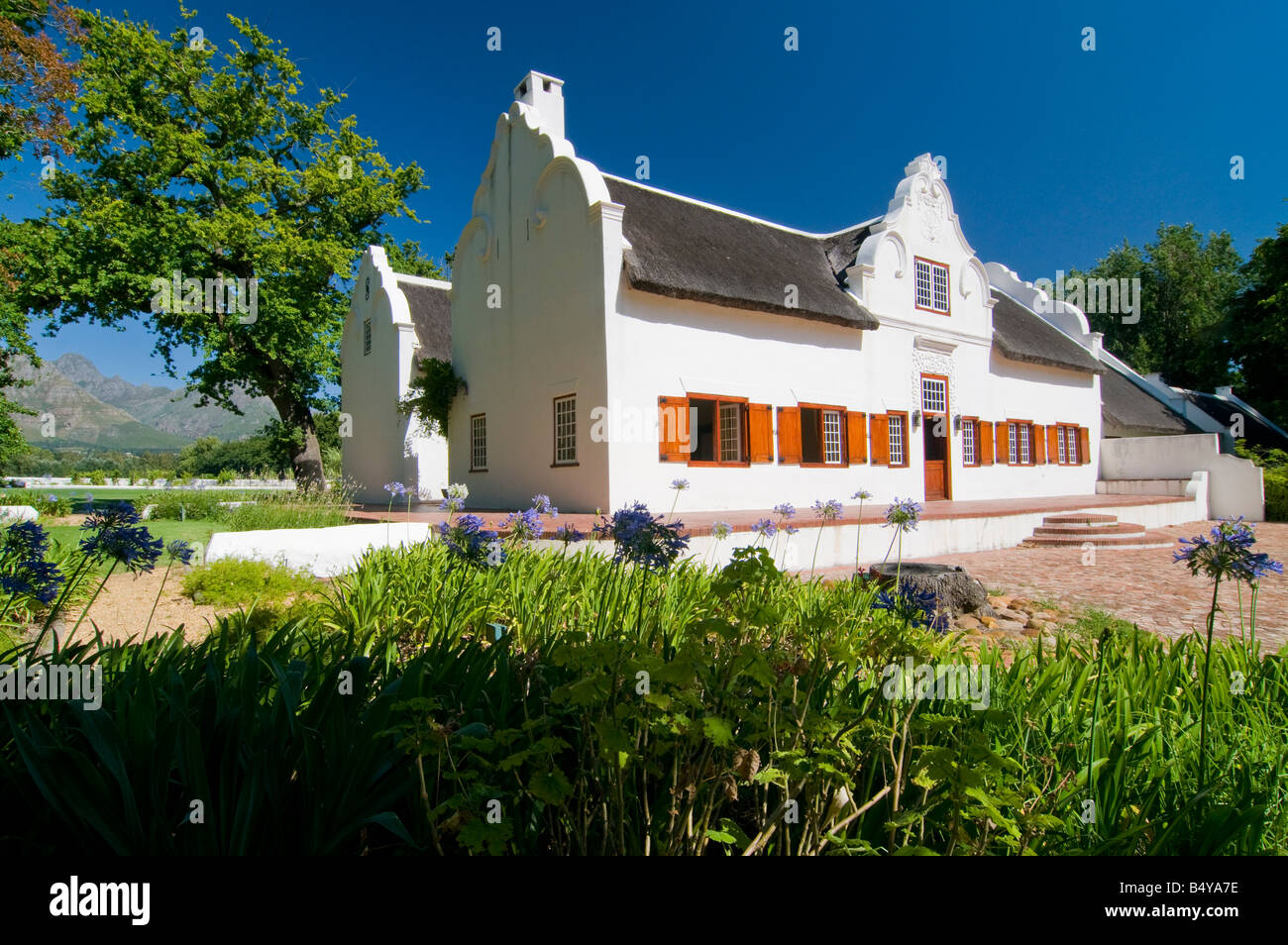 'ine estate Blaauwklippen, Main building in Cape Dutch style, Stellenbosch, Western Cape, South Africa - Stock Image