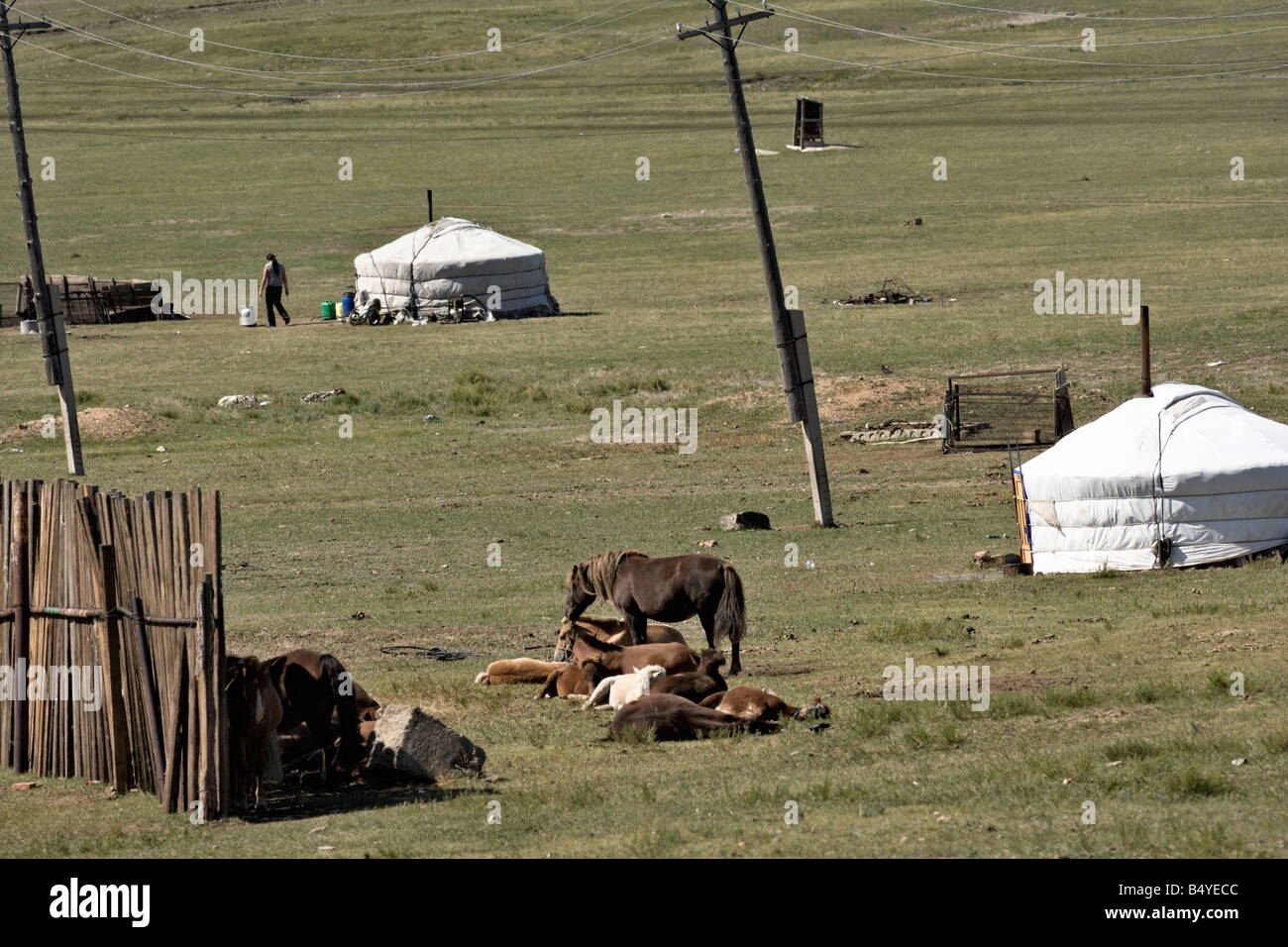 Mongolian gers (yurts), horses, and power line, Mongolia Stock Photo