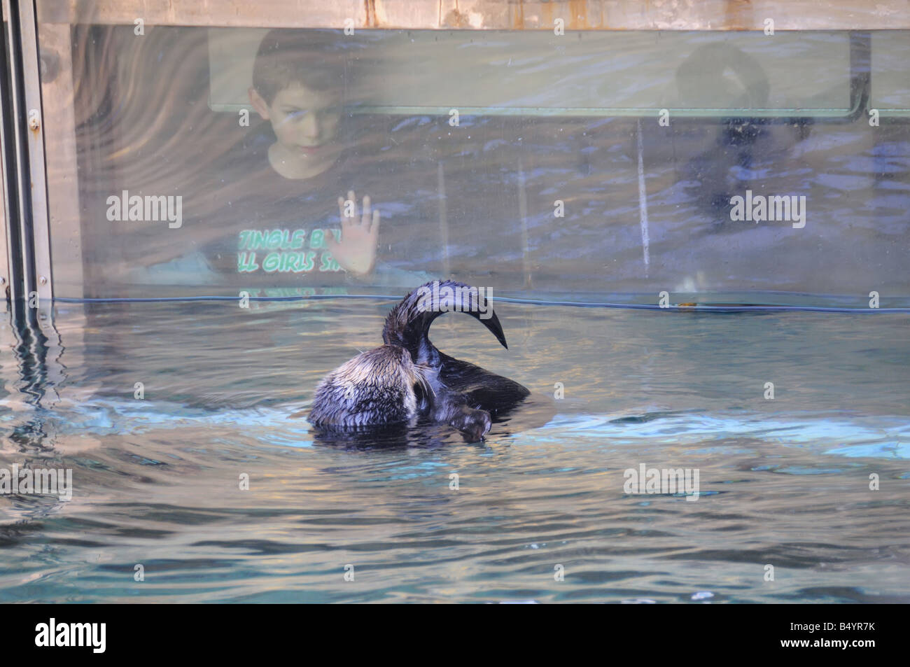 Child Watching Otter - Stock Image