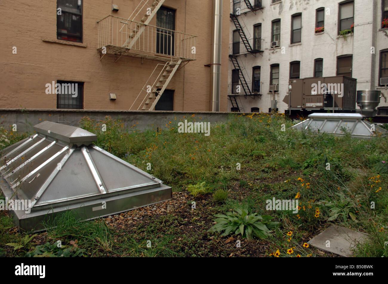 Green Rooftop Garden Wild Flowers Stock Photos Green Rooftop