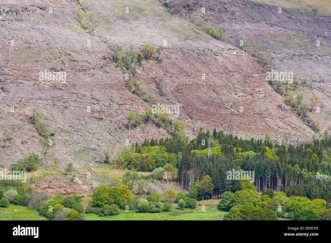 Scottish conifer plantation after being felled. - Stock Image