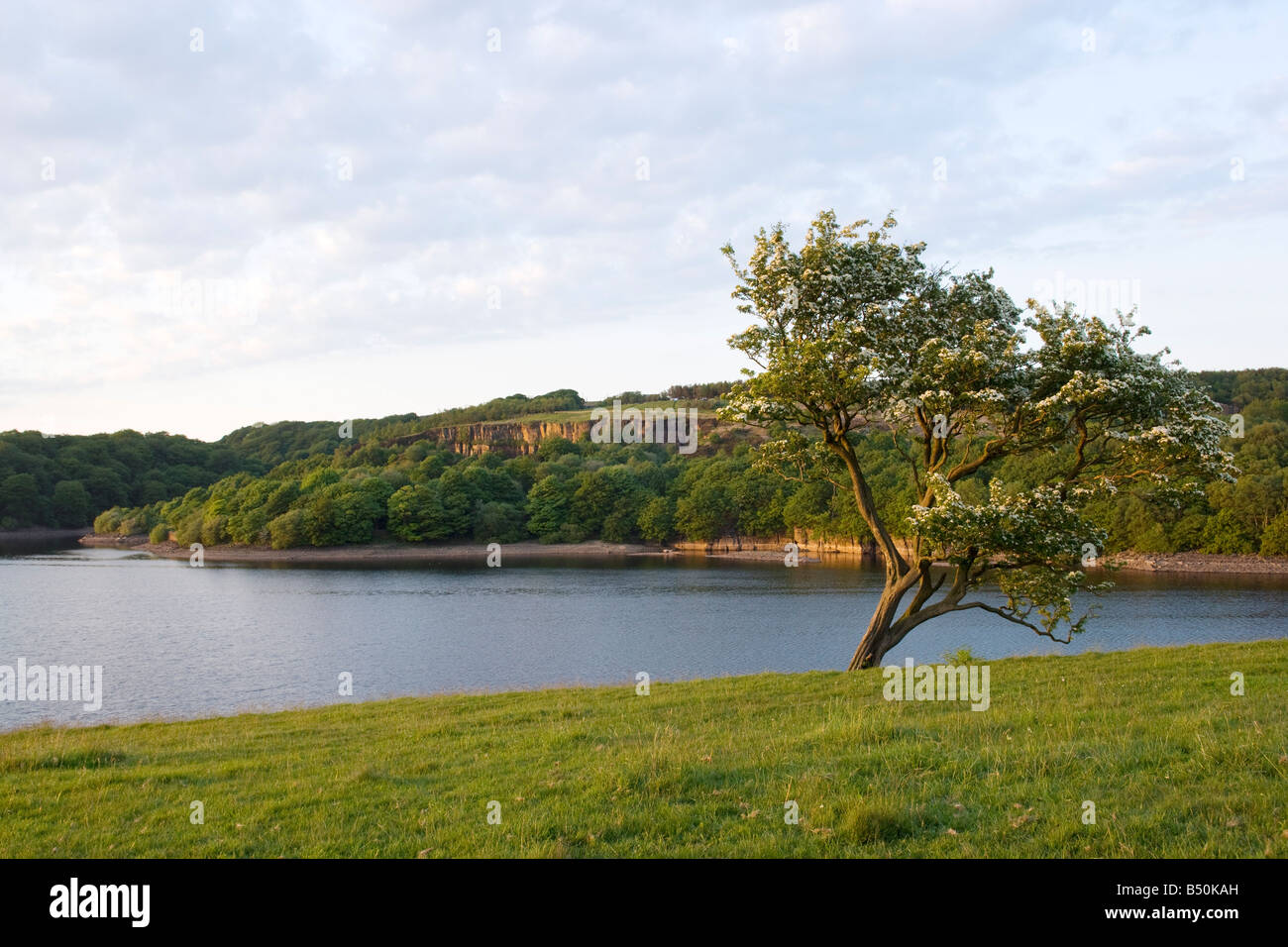 Anglezarke reservoir and hawthorn tree with old quarry in background - Stock Image