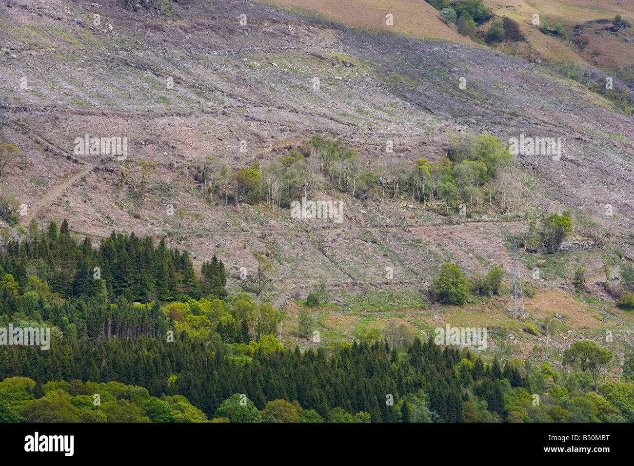 conifer plantation. and bare hillside after timber felling - Stock Image